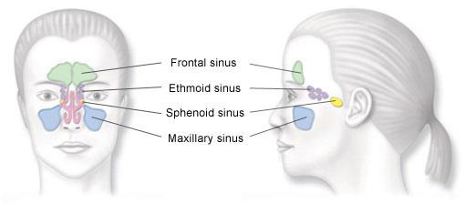 sinus_diagram